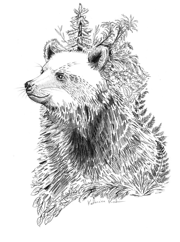bear-forest-worldanimalday-sketch_b_rotwebseite