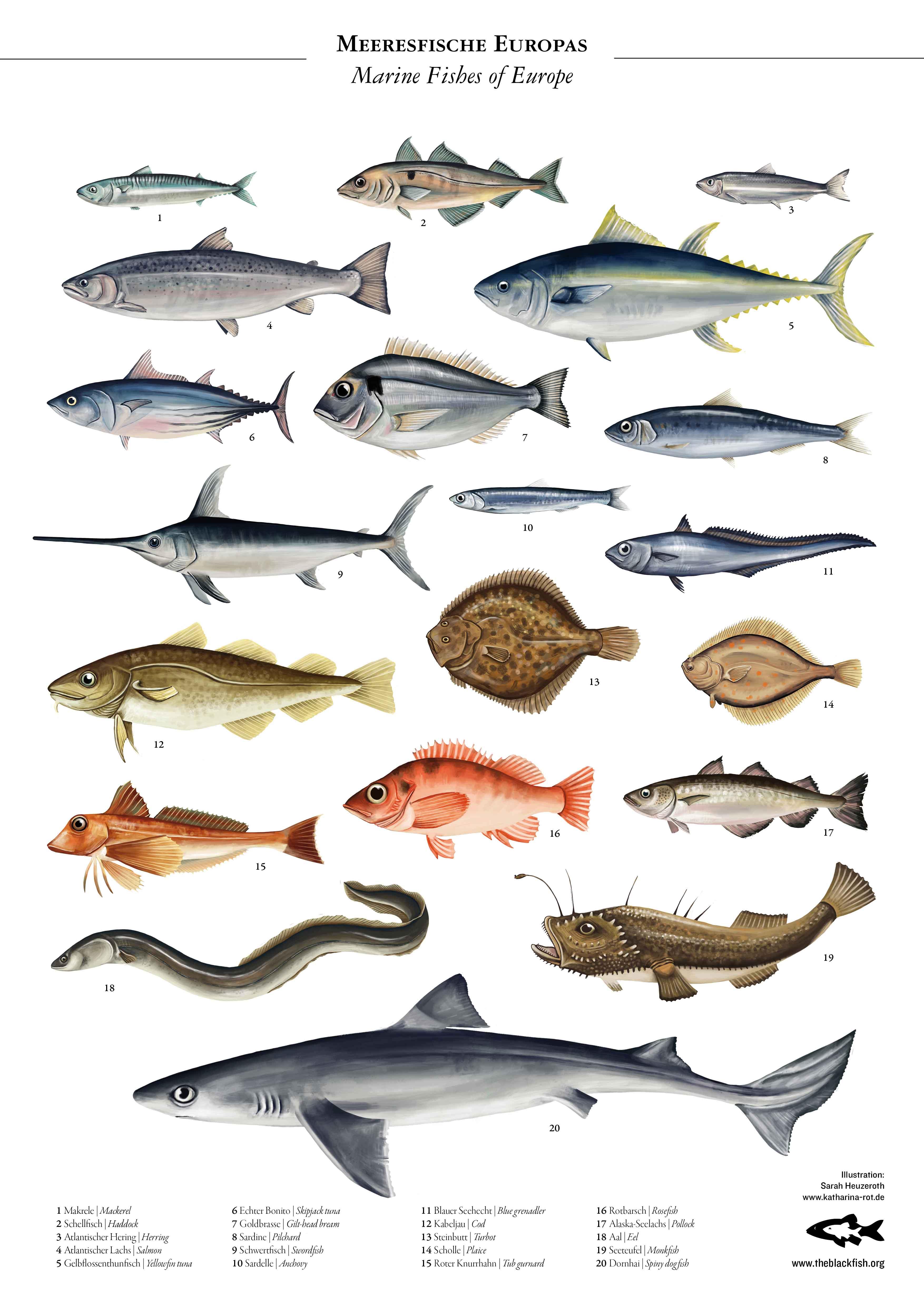 allefische-poster-A3