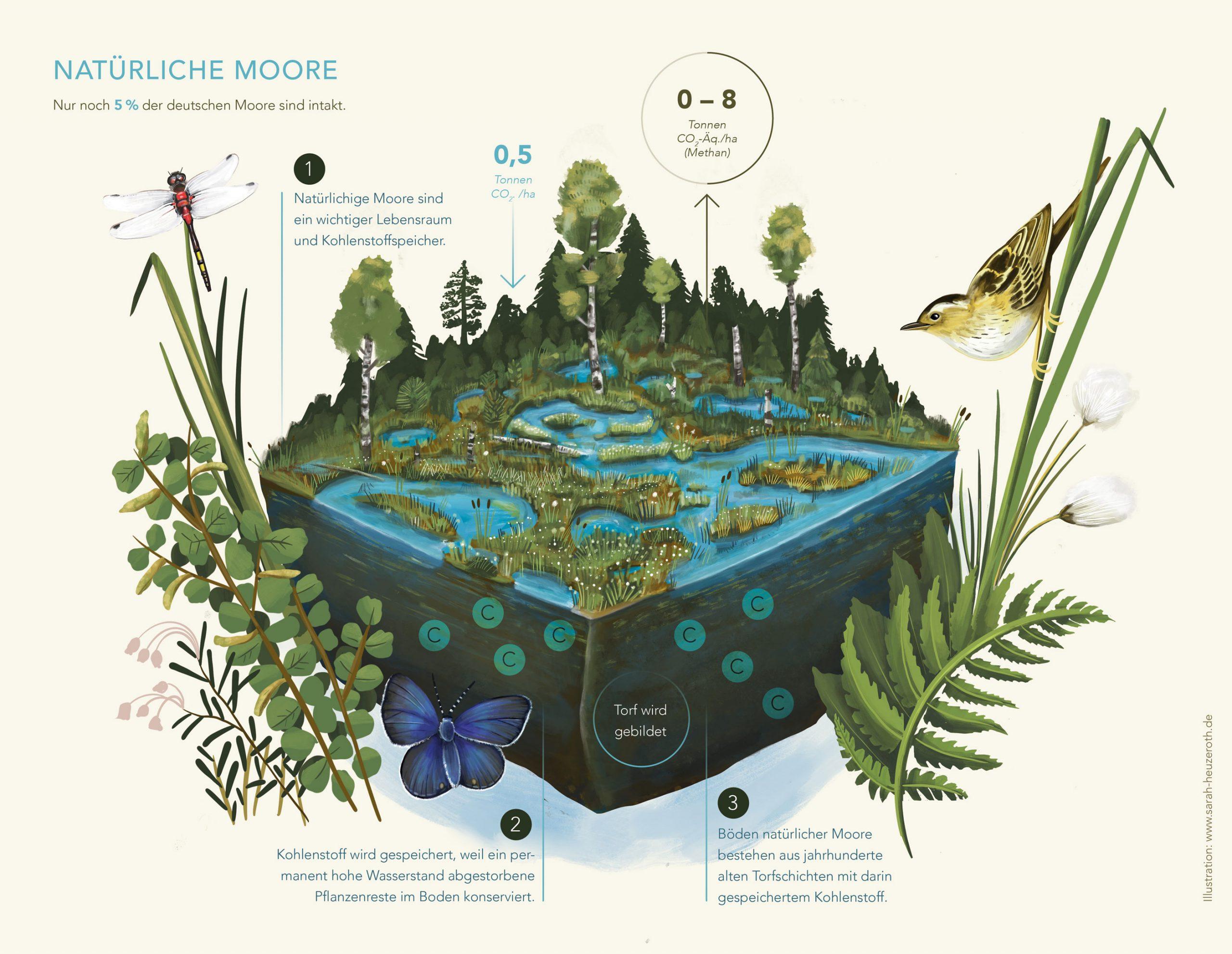 SarahHeuzeroth_Moor-Grafiken1_web