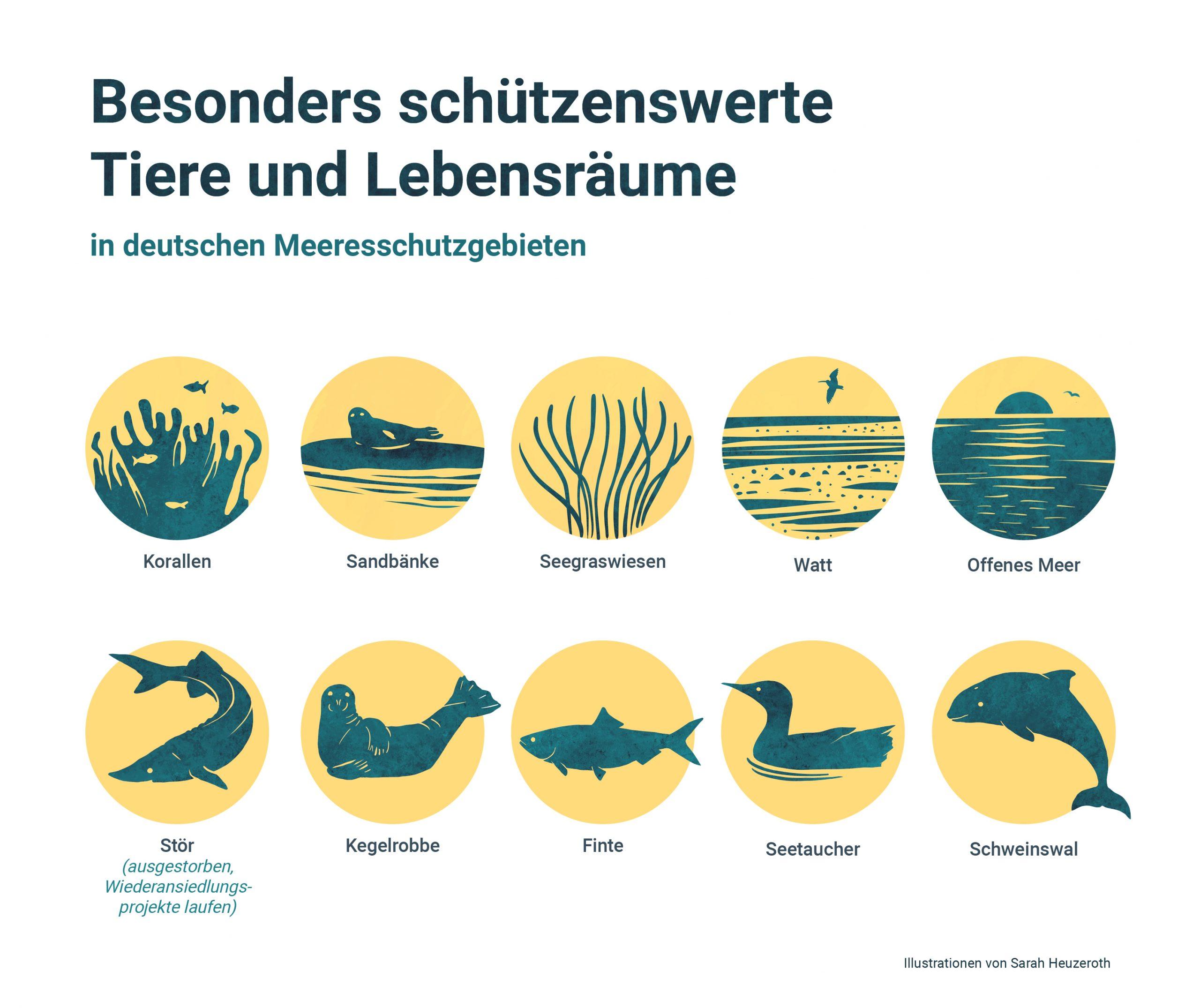 210521_Meer-Grafik3_Meeresschutzgebiete_Deutschland2